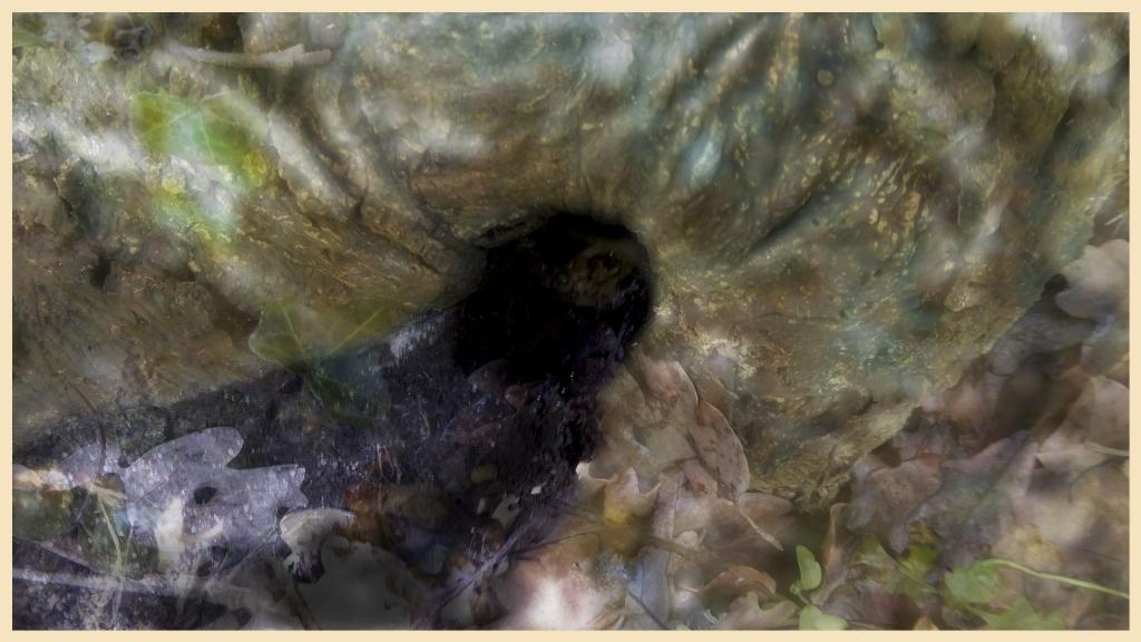 LES FLOUS PHOTOGRAPHIQUES:  le trou à lutin 15177472171028293581