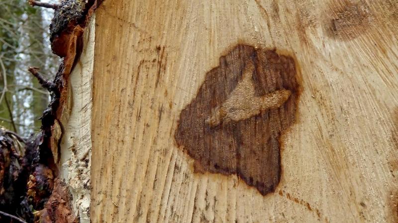 L' esprit de la forêt 15192008101767283218