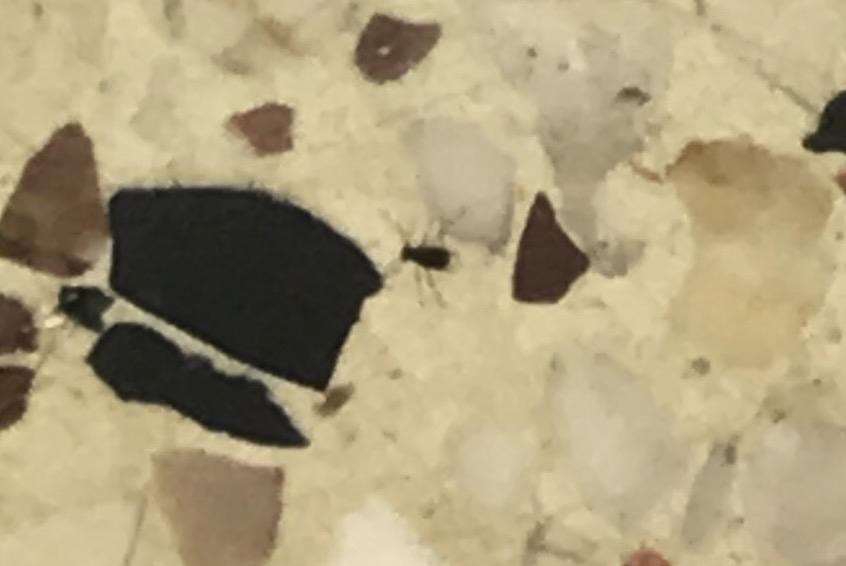 Petits Insectes Blanc Dans Ma Chambre Notre Planete Info