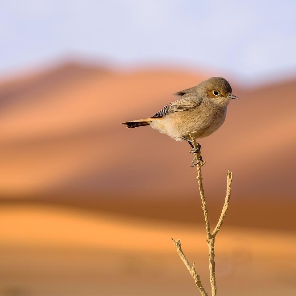 Sossusvlei ... les dunes de Namibie 152650572979753105