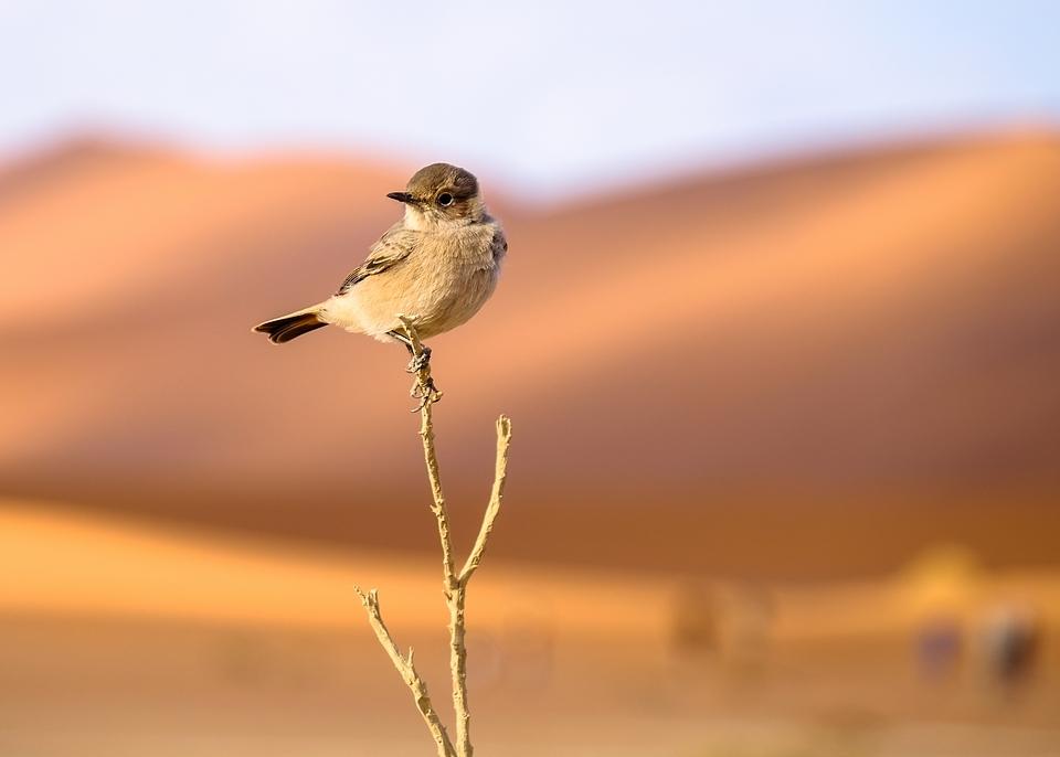 Sossusvlei ... les dunes de Namibie 1526505878875816866