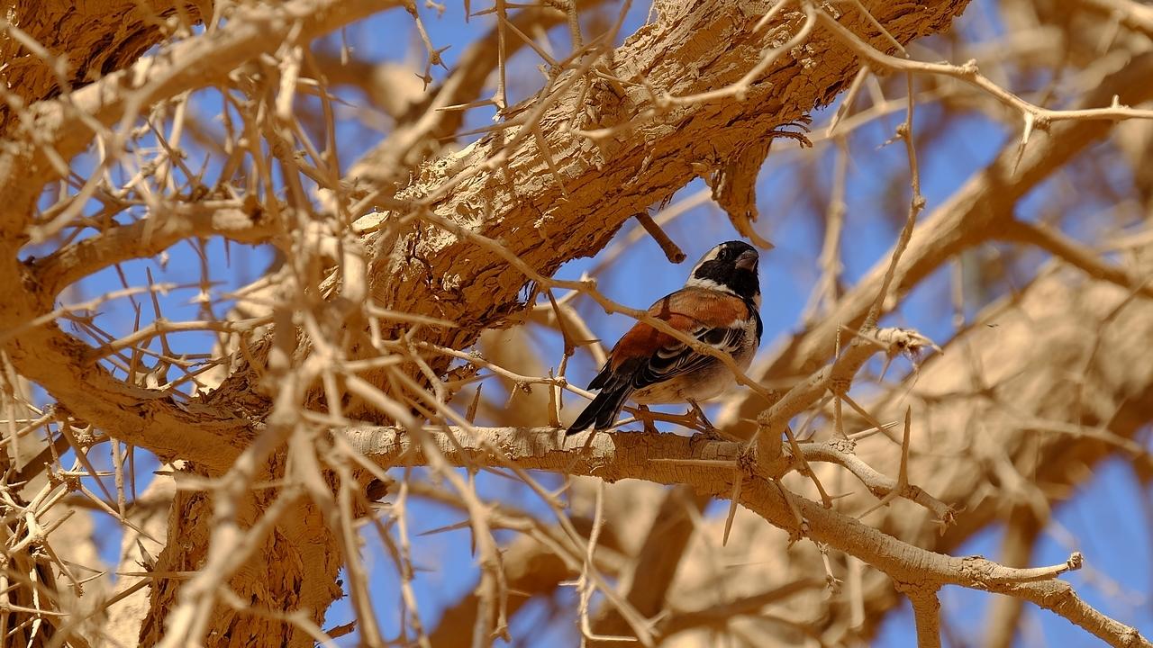 Sossusvlei ... les dunes de Namibie 15265925261164739533