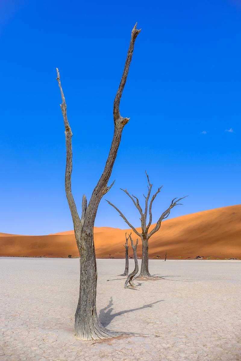 Sossusvlei ... les dunes de Namibie 15265929001689230676