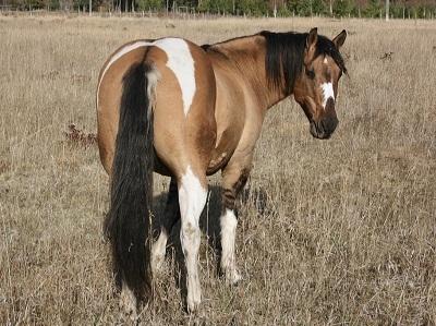 Mustang - Lady Liberty [Réservée à Katherine] 1526820958541447187