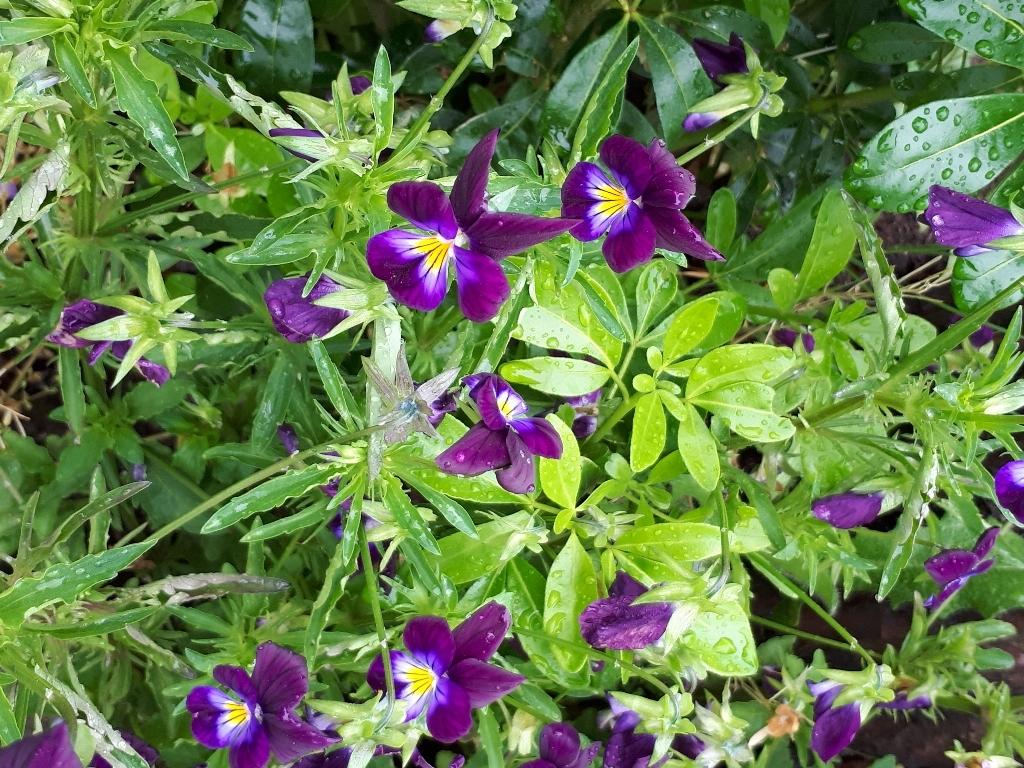 les jardins sont beaux en mai ! - Page 5 15274285091488033437