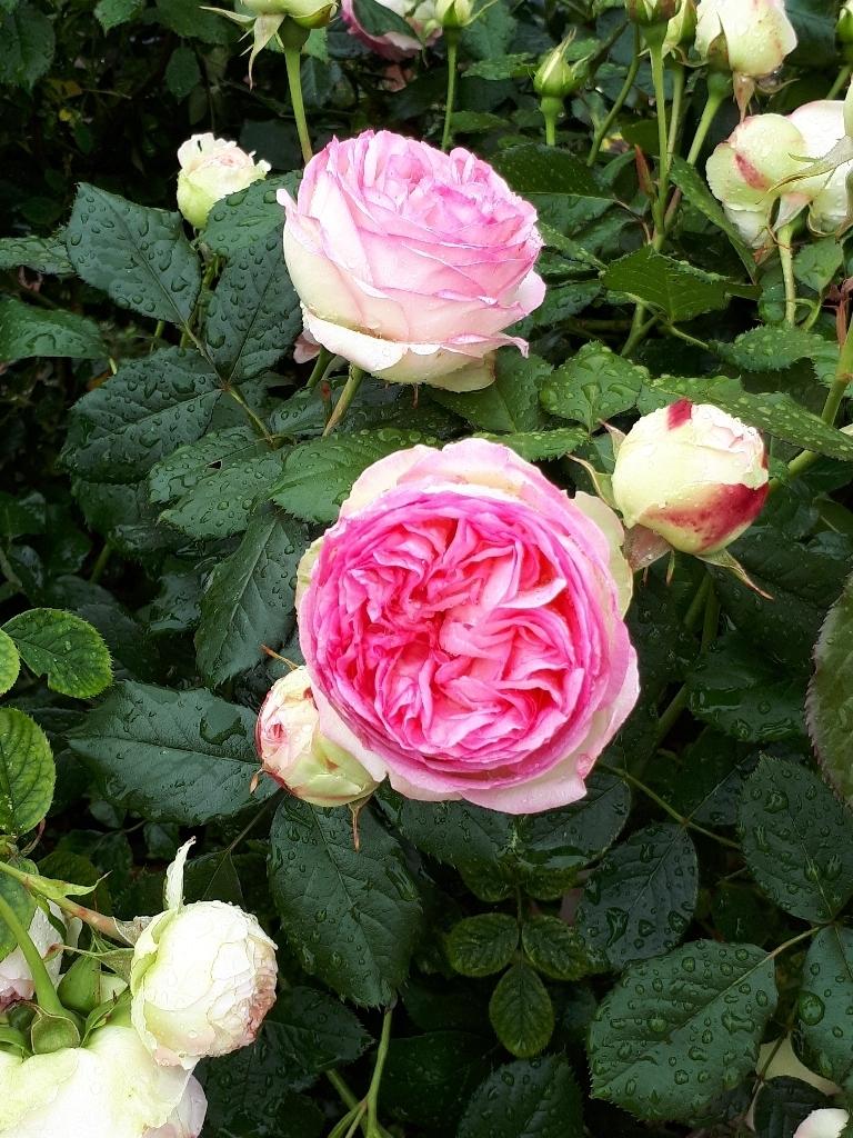 les jardins sont beaux en mai ! - Page 5 15274292071872225131