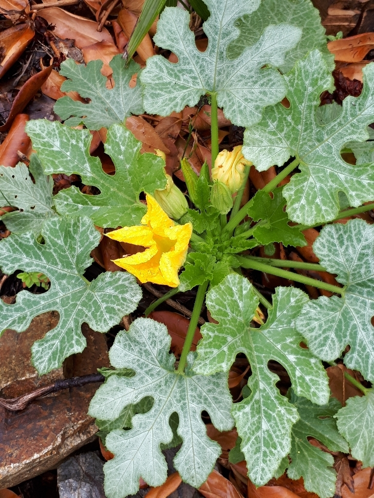 les jardins sont beaux en mai ! - Page 5 1527429342708905300